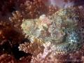 46-scorpion-fish