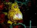 yellowblc-st5